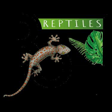 logo de BoReptiles